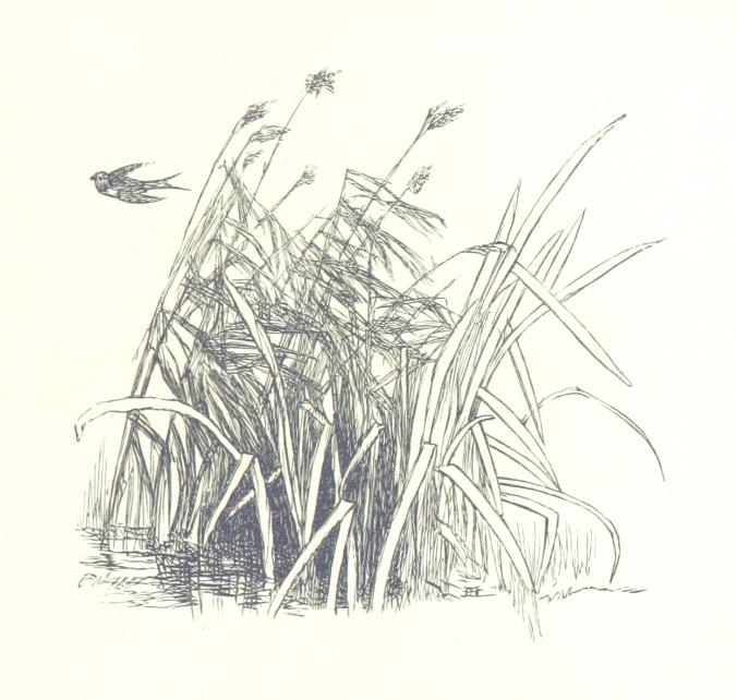 made|new|birdinreeds